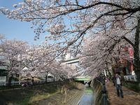Sakura20100406_61